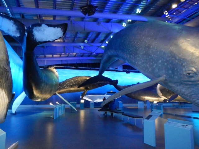 Whales of Iceland exhibition